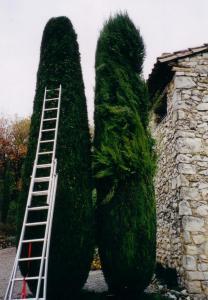 entretien taille dupré la tour
